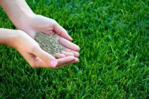 Lawn and Grass Seed