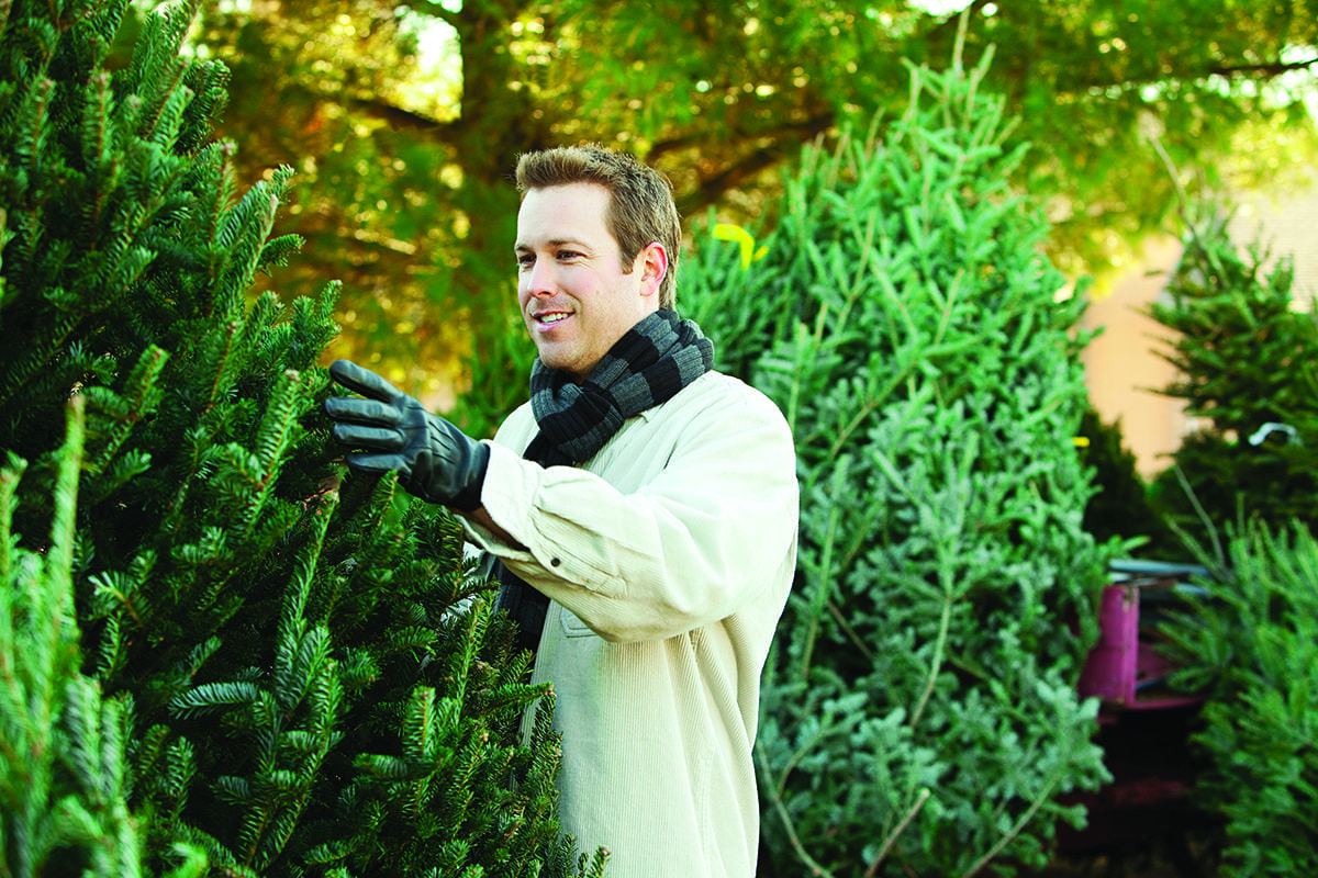 Buying and Caring for Your Fresh Cut Christmas Tree