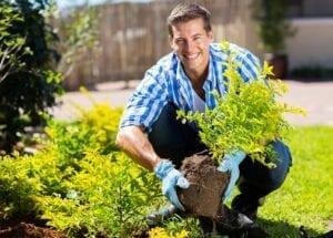 Fall Gardening Tips Fall Planting Tips
