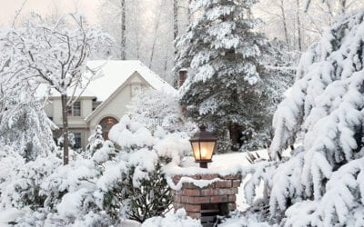 How to Handle Snow and Ice on Trees and Shrubs