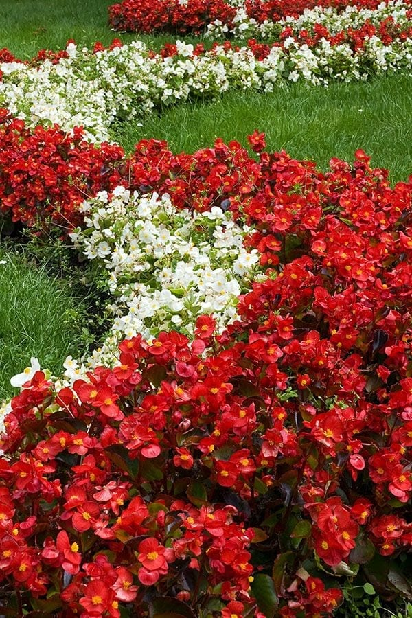 Best Flowering Annuals For Sun Shade On Long Island