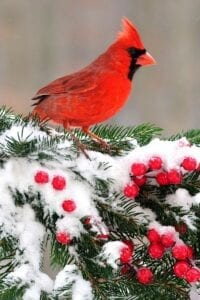 Caring for Birds in the Winter @ Hicks Nurseries