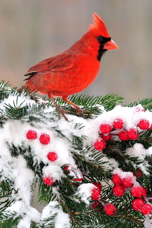 Attract Birds to Your Winter Garden