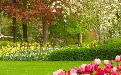 Spring Garden Wake Up for Your Long Island Garden