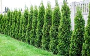 buy garden trees