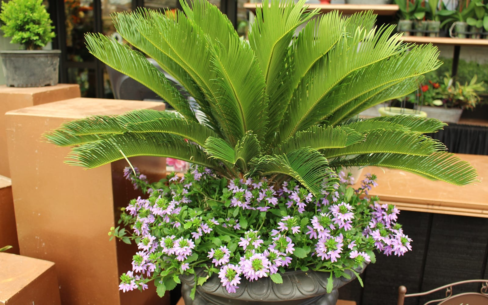 leafy plant with flowers in an urn