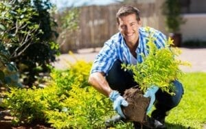 Man in the yard planting a Tree