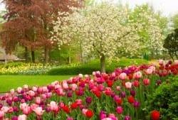 Waking Up Your Long Island Garden
