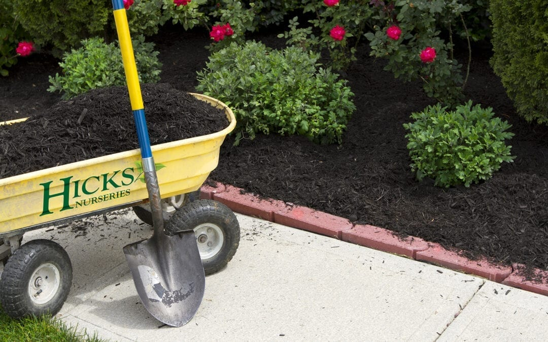Hot Weather Watering Guidelines