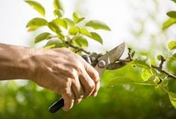 Pruning with a Purpose