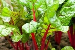 5 Tips for Vegetable Gardening