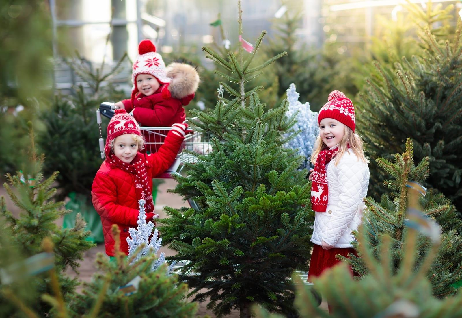 Fresh Cut Christmas Trees & Greens