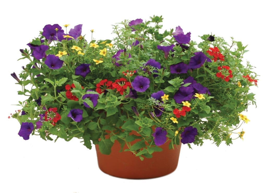 Flowering Annual Planter