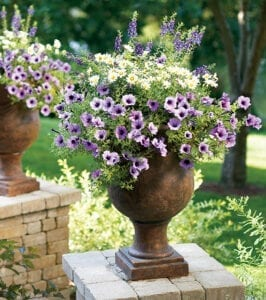 Hanging Baskets Planted in Urns.