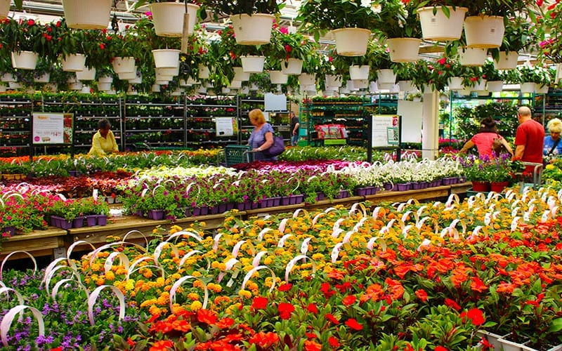 Hicks Nurseries' Plant Selection