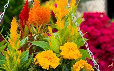 Adding Colorful Plants to the Garden