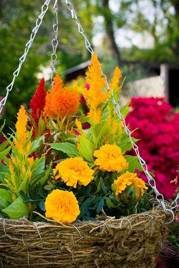 Summer Color with Annual Flowering Plants