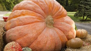 Fall Harvest & Giant Pumpkin Contest @ Hicks Nurseries