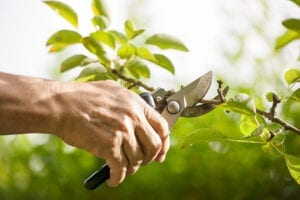 pruning-plants