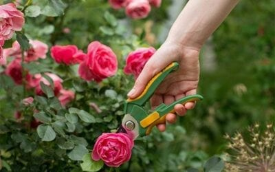 Summer Pruning Made Simple