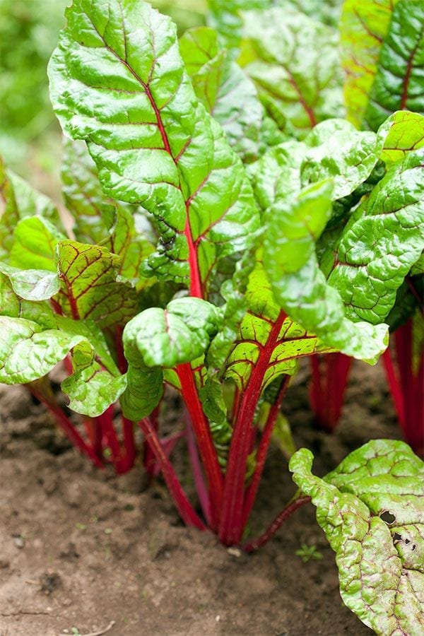 Vegetable Gardening: 5 Tips for Success