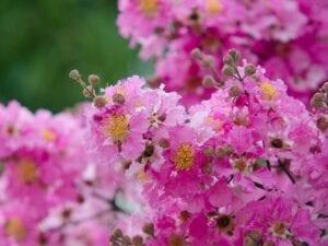 3 Best Summer Flowering Plants For Sunny Gardens Summer Flowers