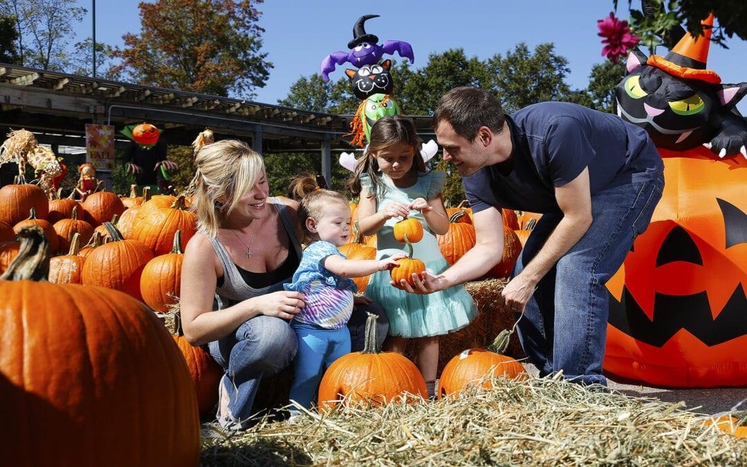 Fall Family Festival Returns to Hicks Nurseries