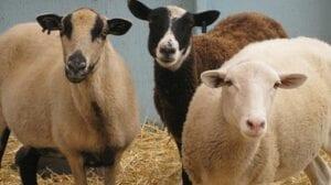 Visit the Farm Animals @ Hicks Nurseries