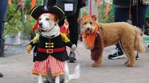 Pet Parade & Competition @ Hicks Nurseries