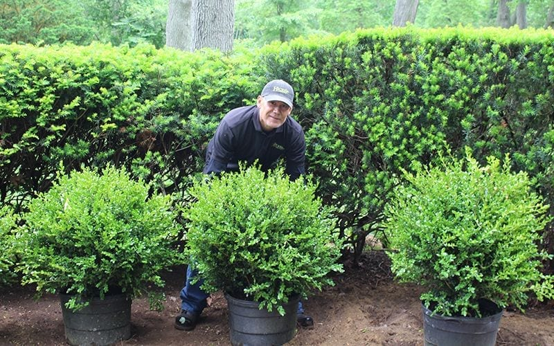 Landscape Designer Planting shrubs and plants