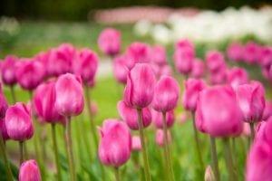 Spring INN at the Hicks Flower Show