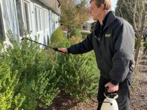 Hicks Landscapes Spraying Anti-Desiccant on Shrubs
