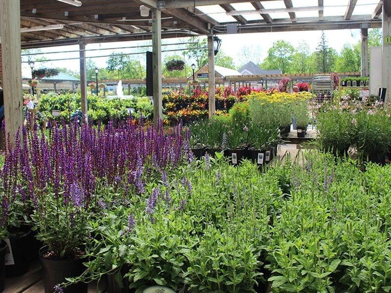 Hicks Nurseries Selection of Perennials