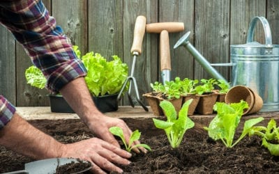 Top 5 Easiest Vegetables to Grow from Seed