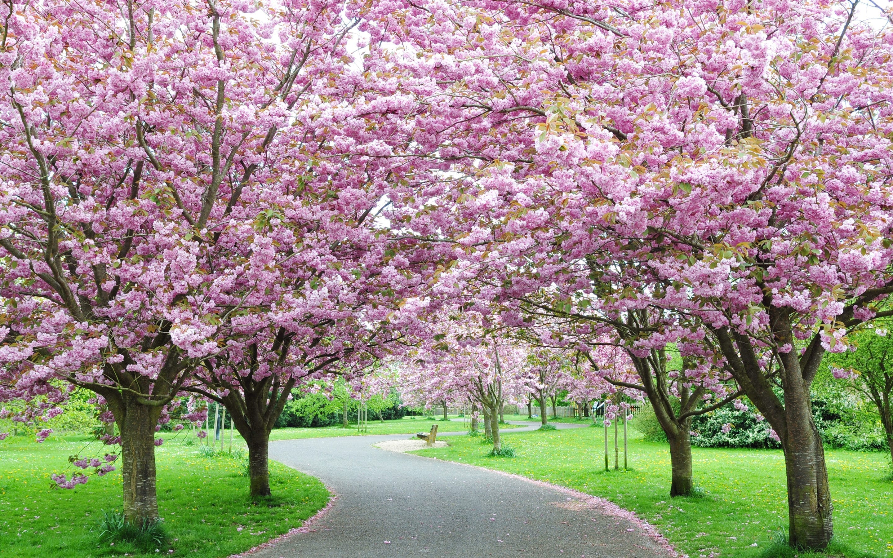 5 Beautiful Trees to Plant Now