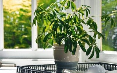 Best Houseplants Room by Room