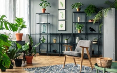 How to Bring Houseplants Indoors for Winter