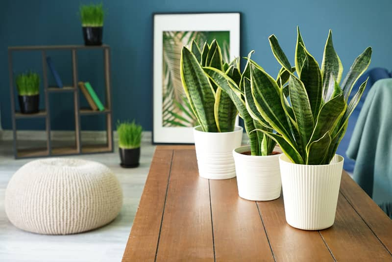 Hard to Kill Houseplants for Your Home