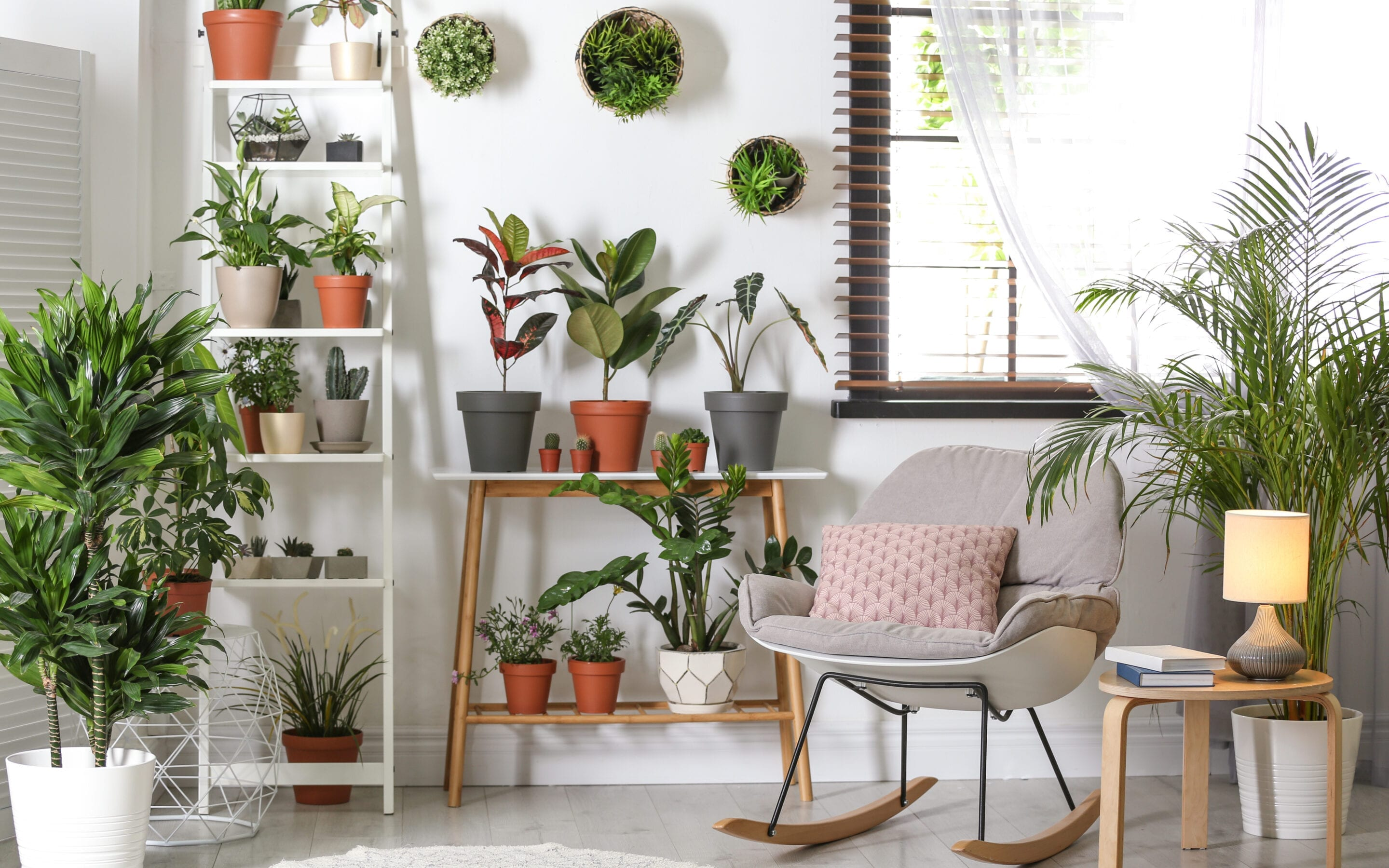Clean the Air You Breathe with Houseplants