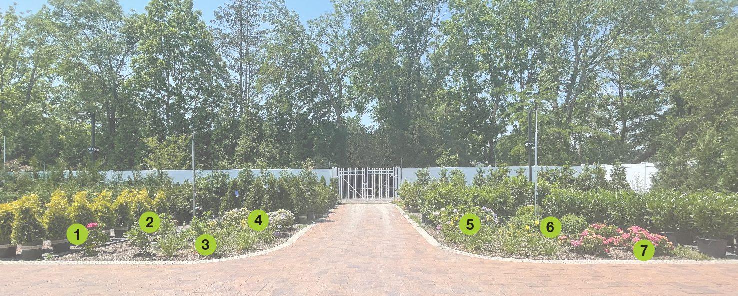 Hydrangea Garden Numbered
